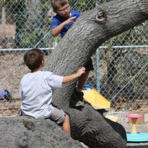 Preschool kids climbing a tree